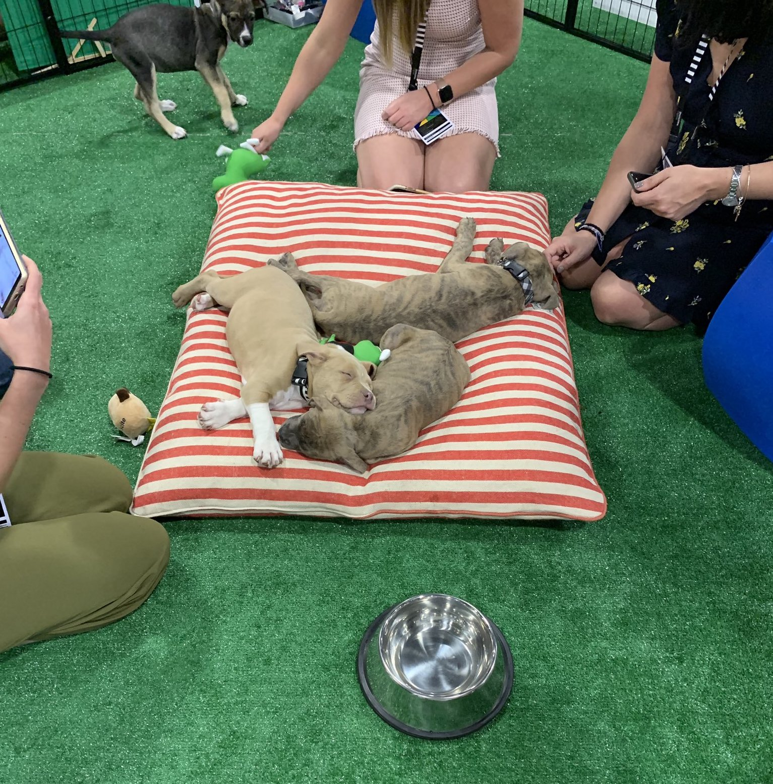 Dog is Good at SuiteWorld 2019